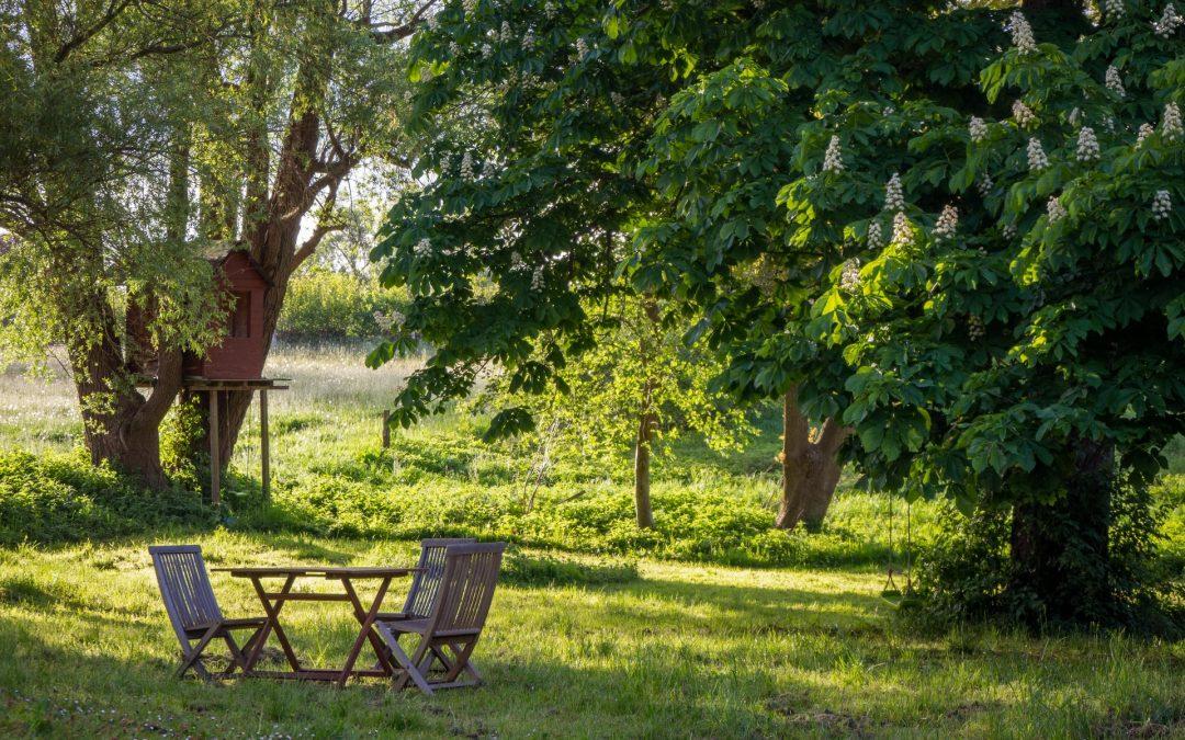 Een schaduwrijke en groene tuin creëren